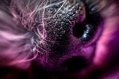 Dogs snout photo. Dogs snout or nose abstract close up macro photo stock photo
