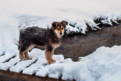 Dogs in the snow. Three dogs are sitting in the snow Stock Photo