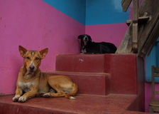 Dogs on stairs Stock Photo