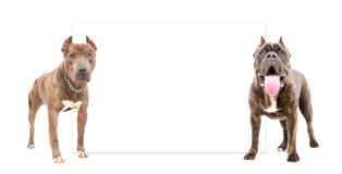 Dogs standing in front of a banner Stock Image