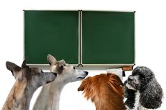Dog school, four dogs in a classroom