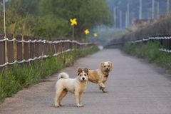 Dogs standing on path in countryside