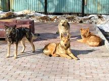 Dogs on the street stock photos