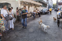 Dogs on the street of Bangkok Royalty Free Stock Photography