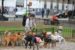 Dogs on the street in Buenos Aires Stock Images
