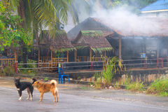 Dogs on the street Thailand Royalty Free Stock Photos