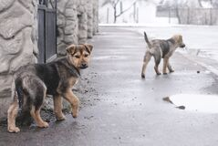 Dogs on streets  Stock Images