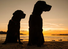 Dogs in the sunset Royalty Free Stock Photography