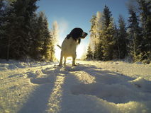 Dogs. Sweet dogs sunny winter day Royalty Free Stock Images
