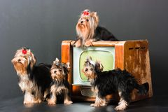 Dogs and televisor Royalty Free Stock Photos