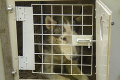 Dogs temporary closed in the cage for transporting royalty free stock photo