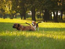 Dogs/Total Strangers, But Friends Royalty Free Stock Images