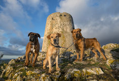 Dogs and tower Stock Images
