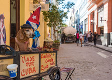 Dogs Trained to Busker in Old Havana,Cuba. Cachito and Canela are dressed up dogs for tourist enjoyment in Old Havana Royalty Free Stock Image
