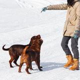 Dogs training Stock Photography