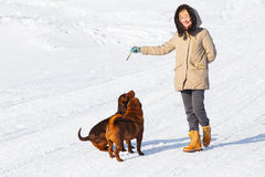 Dogs training Royalty Free Stock Photos