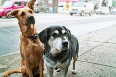 dogs trottoar två Royaltyfri Bild