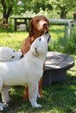 dogs utomhus- Royaltyfri Foto