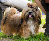 Dogs of various breeds. royalty free stock image