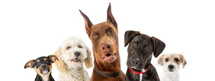Dogs of Various Sizes Close-up Web Banner stock photo