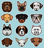 Dogs vector collection. Vector set of funny cartoon dogs. Vector illustration Royalty Free Stock Photography