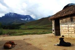 Dogs - Venezuela Stock Photography