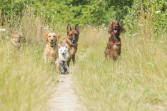 Dogs waiting for command Stock Photos