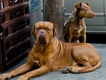 Dogs waiting in the street royalty free stock photos