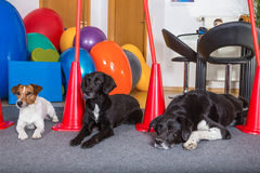Dogs waiting Royalty Free Stock Photography