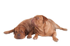 Dogs waking up Stock Photo