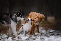 Dogs walk in the park in winter Royalty Free Stock Photos
