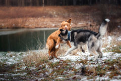 Dogs walk in the park in winter Royalty Free Stock Photography