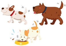 Dogs walking and muching Stock Images