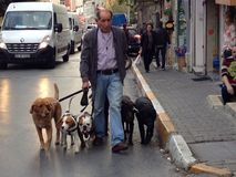 Dogs walking Royalty Free Stock Image