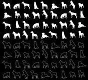 Dogs wallpaper Stock Photography