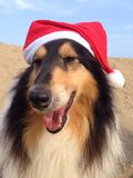 Dogs wearing Xmas Hats Stock Images