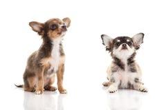 Dogs  on white background Stock Image