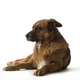 Dogs on the white background Royalty Free Stock Photography