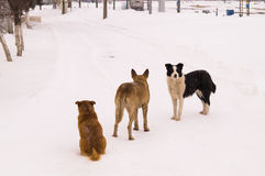Dogs in winter Stock Photography