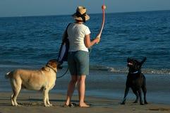 DogsLady Imágenes de archivo libres de regalías