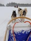 Dogsled в ландшафте зимы стоковая фотография