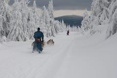 Dogsled auf der Spur von Sedivaceks lang lizenzfreie stockfotos