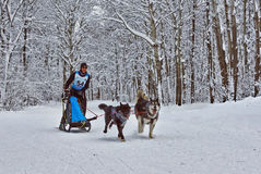 Dogsled - blir den nordliga aboriginer för tappninglastbilar nu spoen Royaltyfri Foto