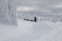 With dogsled on the comb Orlicke Hills Royalty Free Stock Photos