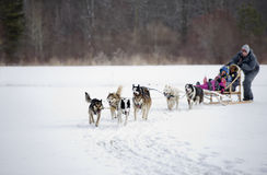 Dogsled competition. Moment caught on photos - dog sled world cup in Yellowknife Royalty Free Stock Photo