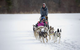 Dogsled competition Royalty Free Stock Photos