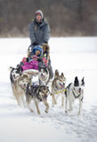 Dogsled competition. Moment caught on photos - dog sled world cup in Yellowknife Stock Photography