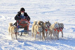 Dogsled. NADYM, RUSSIA - MARCH 14, 2015: races on dogsleds during a traditional holiday of aboriginals of the North Day of the reindeer breeder Stock Image