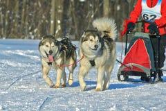 Dogsled - o vintage transporta o aborígene do norte Imagens de Stock Royalty Free