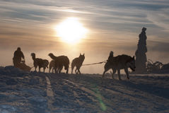 Dogsled op lange sleep van Sedivacek Royalty-vrije Stock Fotografie